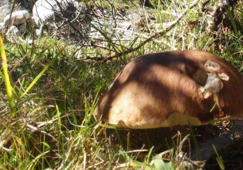Balade et cueillette de champignons