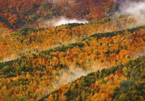 Randonnée forestière automnale