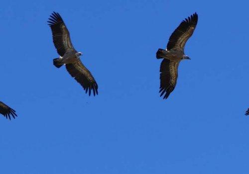 Observation des grands oiseaux
