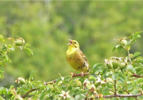 Rando à l'écoute des oiseaux