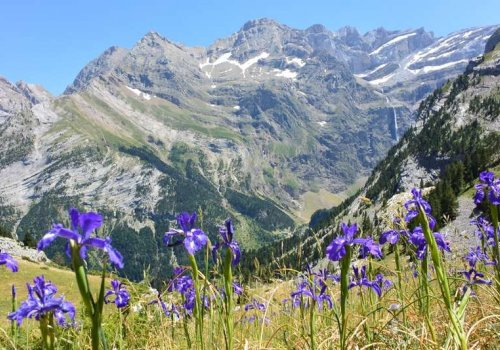 Rando botanique en Pyrénées